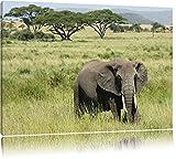 gigantischer Elefant in der Savanne Leinwand, XXL riesige
