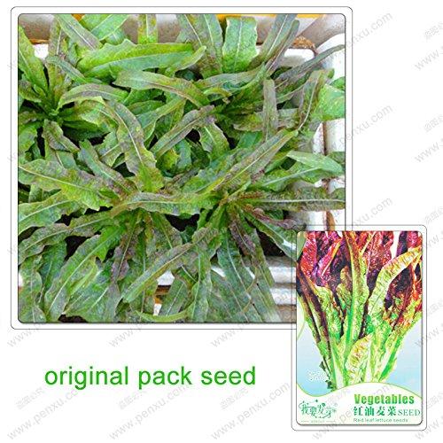 30 graines/Pack, feuilles de laitue graines de légumes, plantes de potager bio en pot feuilles graines de laitue