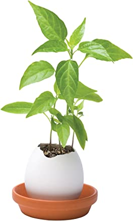 Tinement Gem/üse Samen 50 st/ücke Indian Ghost Pepper Samen Hausgarten Seltene Red Chili Gem/üse