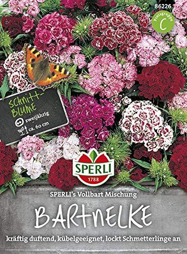 Sperli-Samen Bartnelke SPERLI's Vollbart...