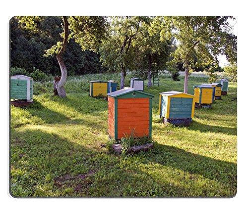 luxlady Alfombrillas de goma natural imagen ID 31237097Madera Colorful Colmena Grupo en verano Morning Sunrise–Granja Jardín