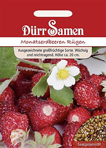 Erdbeeren Monats Erdbeeren Samen