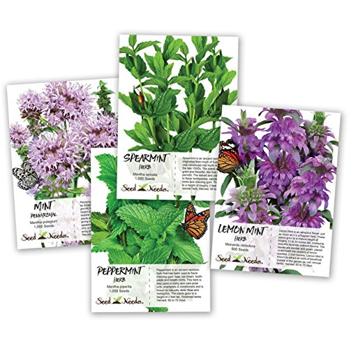 Seed Needs, Non-GMO Mint Seed Collection (Includes 3,500 Seeds...