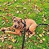 Toozey Schleppleine für Hunde - 5m, 10m, 15m, 20m - Gummierte Hundeleine für Kleine bis Große Hunde mit Handschlaufe und Aufbewahrungsbeutel - Schwarz #5