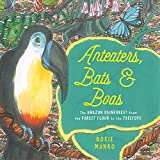 Anteaters, Bats & Boas: The Amazon Rainforest from the Forest Floor to the Treetops