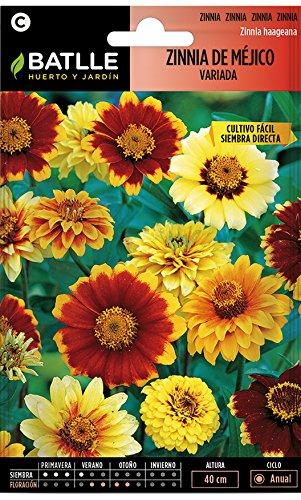 Semillas de Flores - Zinnia de Méjico variada - Batlle