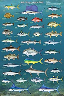 Salt Water Game Fish of North America Educational Reference Chart Poster 24x36 24x36 Laminated Print XXX-A236F-LAM