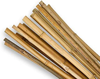 SupaGarden 2ft High Quality Extra Strong Bamboo Garden Canes