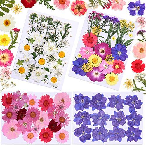 Juego de Flores Secas de Bricolaje de 98 Piezas Flores de Margarita Secas Naturales Reales Flores Prensadas Mixtas Múltiples de Colores para Joyería de Resina DIY Arte de Uñas Álbum de Recortes