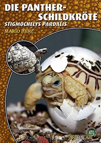Die Pantherschildkröte: Stigmochelys pardalis