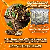 Many Morels Mix! Morel Mushroom Spore Growing Kit 3 Pack – Best Outdoor Morel Mushroom Growing Kit...
