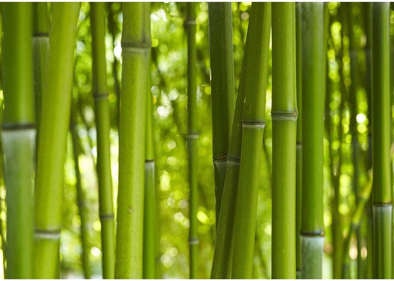 Vlies Fototapete 350x245 cm PREMIUM PLUS PLUS PLUS Wand Foto Tapete Wand Bild Vliestapete - DREAM OF BAMBOO - Bambuswald Bambus Wald Asien Asia Baum Bamboo Way Bambusweg Grün - no. 0071 B0196TDBSI 8450bc