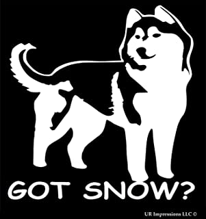 UR Impressions Got Snow -Siberian Husky Decal Vinyl Sticker Graphics for Cars Trucks SUV Vans Walls Windows Laptop|White|5.5 X 5.25 Inch|URI436
