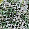迷彩ネット 偽装網 農業用日焼け止め ダストカバー 森林地帯迷彩ネット|屋外キャンプシューティング狩猟パーティー装飾迷彩ネットワーク2x3m (Color : Woodland Digital)