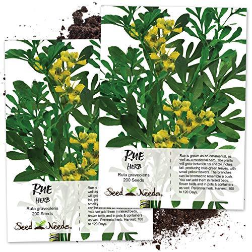 Seed Needs, Rue Herb (Ruta graveolens) Twin Pack...