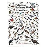Steven M. Lewers Earth Sky Water LEWERSBBSPT005 Peterson's Backyard Birds of Southeast Poster