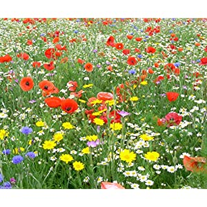 2 kg WILD FLOWER SEEDS MEADOW MIX GRASS PREMIUM MIX Mix 24 80/20