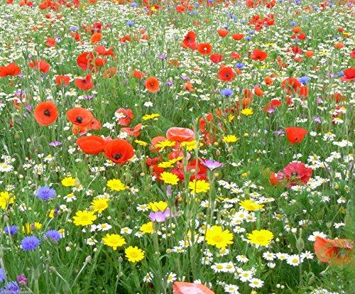 2 kg WILD FLOWER SEEDS MEADOW MIX GRASS PREMIUM MIX Mix 24 80/20