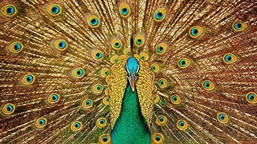 LJJSIFK Pintura de Bricolaje por números para Adultos Kit de Pintura por números en Lienzo para Principiantes-Pluma de Pavo Real de pájaro-Decoración del hogar 16 x 20 Pulgadas (sin Marco)