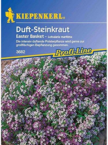 Lobularia Steinkraut Easter Basket Mischung