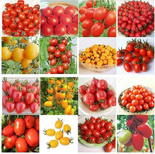 100pcs 24 Kinds Graines de tomate mixte Paquet Violet Noir Rouge Jaune Vert Cerise Pêche Poire Graines Légumes Plantes Graden bio
