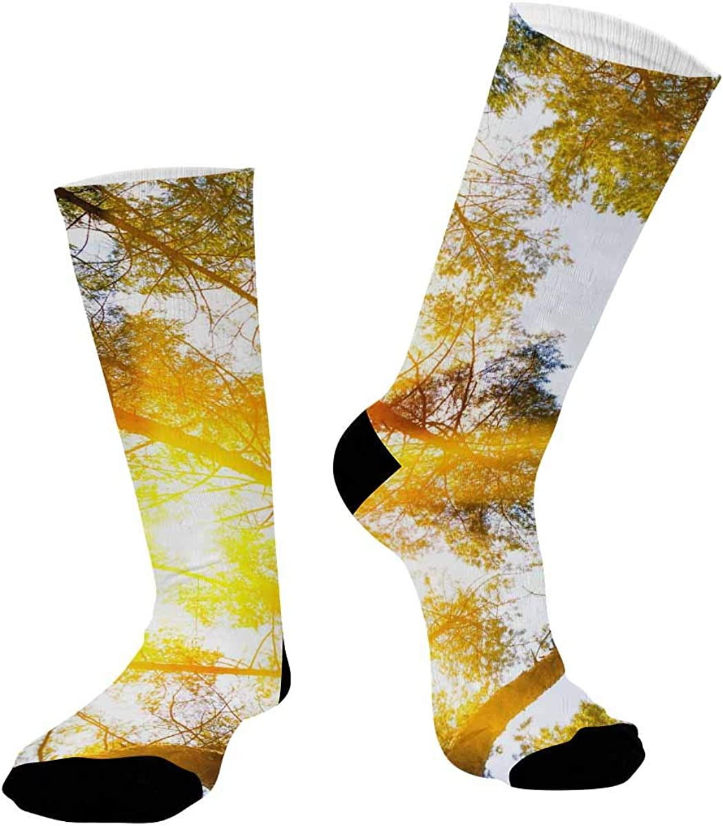 INTERESTPRINT Breathable Sublimated Crew Socks Outdoor Athletic Socks Forest Trees