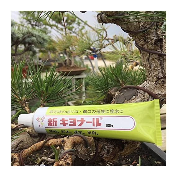 Kiyonal new bonsai pruning cutting paste 100g 4 japanese cutting paste for bonsai tree after pruning. It is essential bonsai tool from japan. Please apply kiyonal to the cut branch, limb, twig to protect cut end. Paste will last a very long time. Dries quickly and easy to apply.