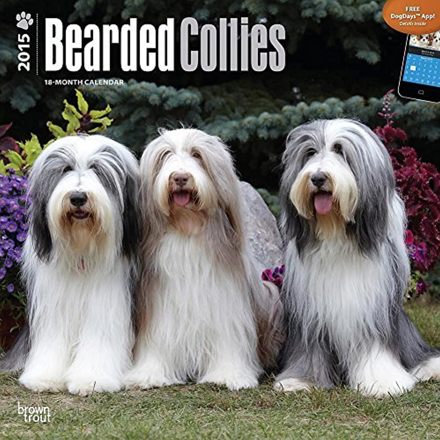 Bearded Collies 2015 Wall Calendar by 2015 Calendars Calendars Calendars B0141MM3ZM | Sale Düsseldorf