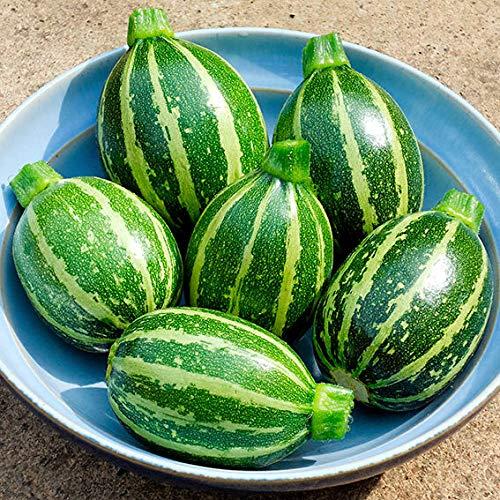 Qulista Samenhaus - Bio Zucchinipflanzen F1 Frühe und reiche Ernte | Zucchinisamen Mini-Zucchini Kletterzucchini Gemüsesamen 10pcs Winterhart mehrjährig, Ideal für kleinere Gärten Terrasse