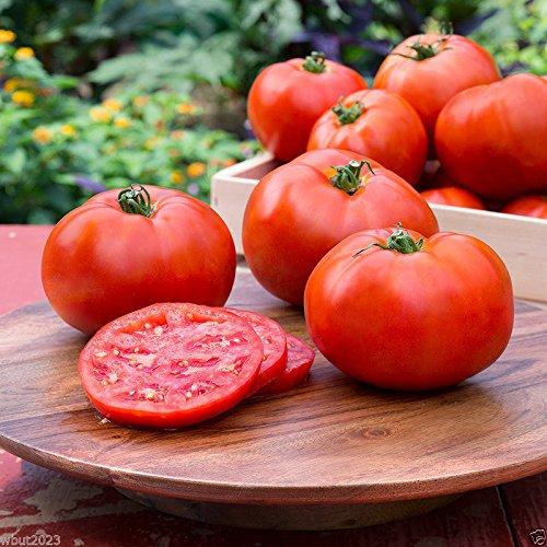 Better Boy Tomato SEEDS,(Lycopersicon lycopersicum) Organic (500 Seeds)