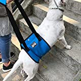 Top 10 Dog Harness for Stairs