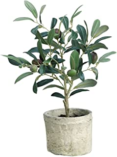 Best live olive topiary Reviews