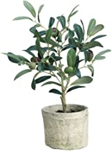 Olive Tree Green Plastic Potted- 12