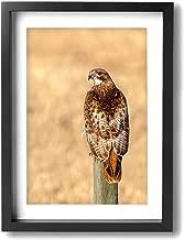 Best abstract hawk art Reviews