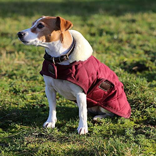 Kentucky Hundemantel Bordeaux M