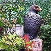 Frofine Realistico Falco Decoy Grande Falco Giardino Esterno Aquila Spaventapasseri Controllo dei parassiti da Giardino Deterrente per Uccelli Spaventa Uccelli Scaccia Piccioni Uccello Repeller #5