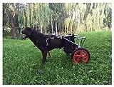 Carrito para perros, adecuado para la práctica de mascotas, rehabilitación, lesiones...