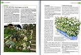 Zoom IMG-2 la rosa classificazione cure colturali