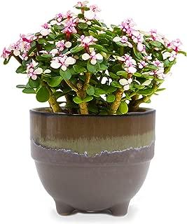 Dahlia 4'' Inch Drip Glazed Ceramic Planter/Succulent Pot/Plant Pot, Brown