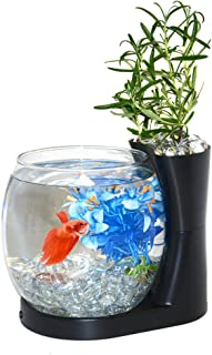 Elive Betta Bowl Aquarium & Planter Black by Elive
