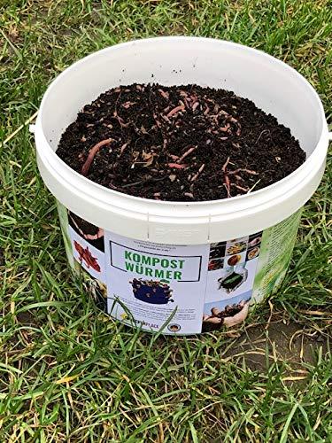 Kompostwürmer Kaufen 500 Stück in Spezialeimer Kompostbeschleuniger Wurmkomposter Gartenwürmer Mistwürmer Lebend Regenwürmer