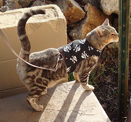 Mynwood Cat Jacke /Geschirre Schädel Kätzchen bis zu 8 Monate - ausbruchsicher