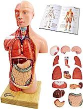 """مدل بدن انسان برای کودکان و نوجوانان ، 15 قطعه قابل جدا شدن از مدل انسانی ، آناتومی بالا تنه انسانی 11-مدل """"با مدل اسکلت مغز قلب برای دانشجویان پزشکی ، ابزار یادگیری پزشکی ، نمایش آموزش ، پایه چوبی ، 6 سالگی"""""""