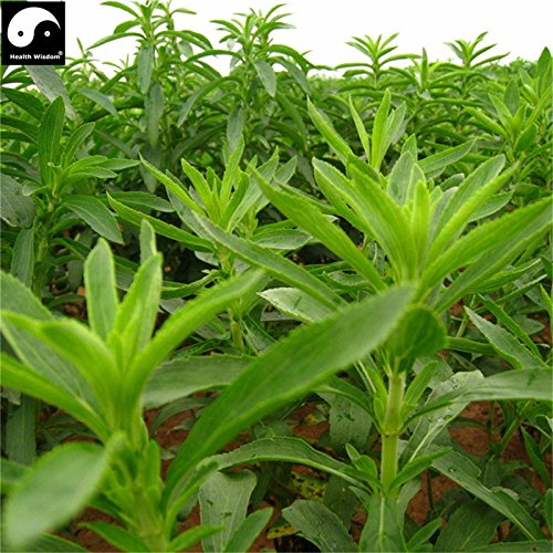 Calories Zéro de plantes chinoises graines vertes Stevia bio à base de plantes Bonsain Graines Jardin sucre édulcorant naturel Tian Ye Ju