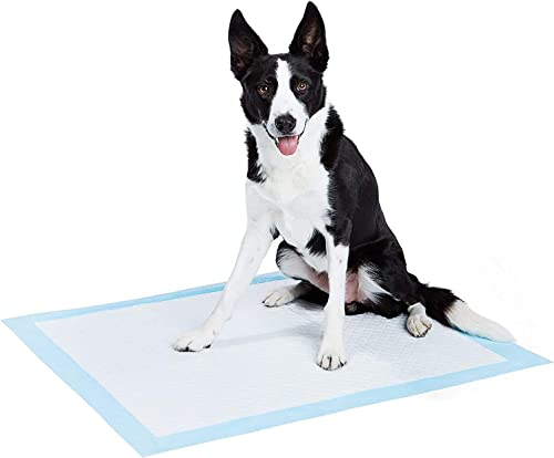 AmazonBasics Dog and Puppy Pee Heavy Duty Absorbency Potty Training Pads with Leak-proof Design and Quick-dry Surface