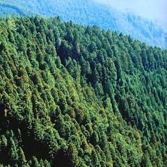 森と近代日本を動かした男 ~山林王・土倉庄三郎の生涯