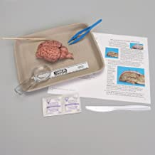 Young Scientist's Brain Dissection Kit