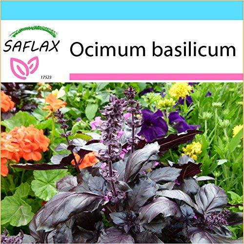 SAFLAX - Kit cadeau - Basilic rouge - 200 graines - Ocimum basilicum