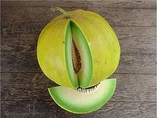 100 Seeds Boule D'or Melon aka Golden Perfection Rare Beautiful Non GMO Heirloom Fruits Garden tokoelv