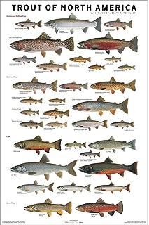 Joseph R. Tomelleri Laminated Trout of North America Fish Chart Poster Print 24x36